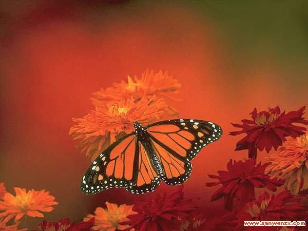 蝴蝶 自然笔记